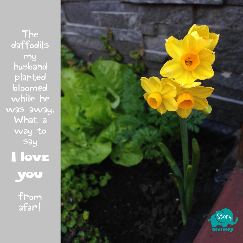 The daffodils my husband planted bloomed while he was away. What a way to say I love you from afar!